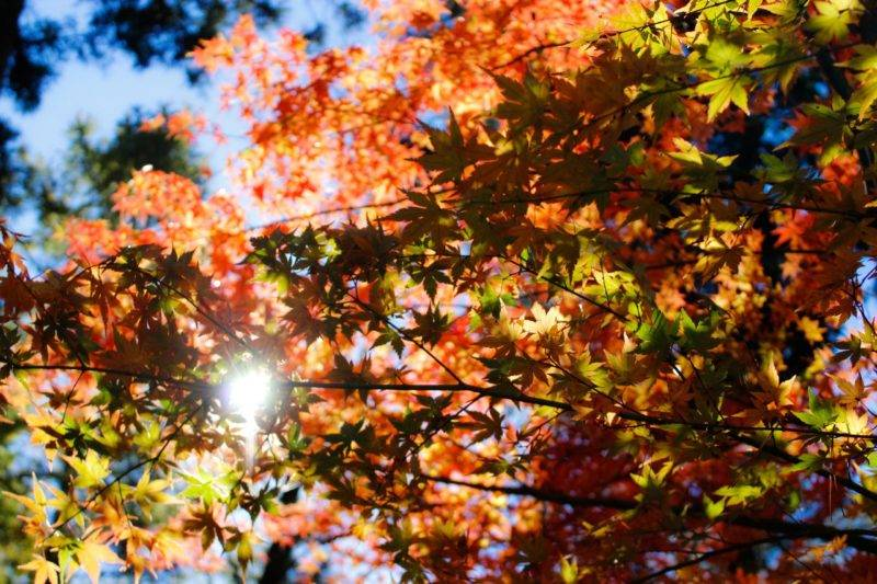 autumn leaves in New Zealand
