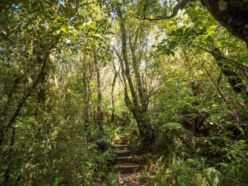 Stairs up to Puakai Hut