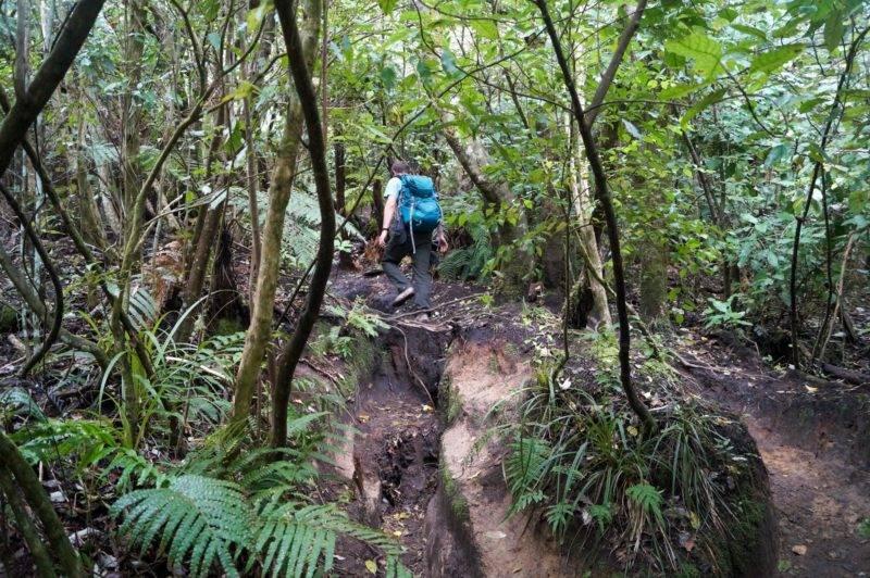 Mount Tauhara Walk