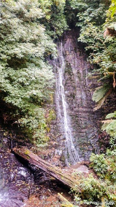 The barrs falls are hidden in the forest