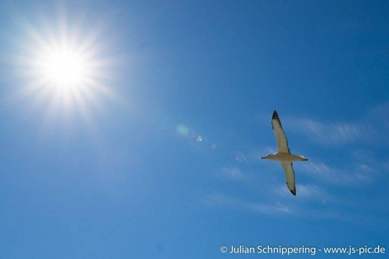 Albatross Colony Dunedin